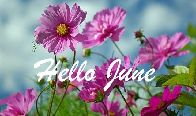 summer-flowers-beauty.jpg